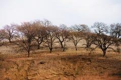 Rij van Bomen op Berg in Noordelijk Californië Stock Foto