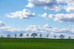 Rij van bomen op een groen gebied tegen blauwe hemel met wolken Royalty-vrije Stock Afbeeldingen