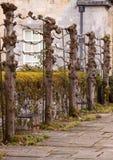 Rij van Bomen Pleached Royalty-vrije Stock Afbeeldingen