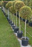 Rij van boomzaailingen Royalty-vrije Stock Afbeeldingen