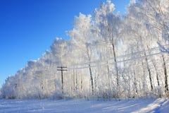 Rij van de de winterbomen Royalty-vrije Stock Afbeeldingen
