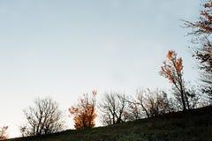 Rij van de herfst donkere bomen op heuvel van berg Royalty-vrije Stock Foto's