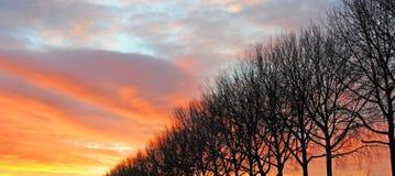 Rij van de silhouetten van de de winterboom tegen avondhemel Royalty-vrije Stock Afbeelding