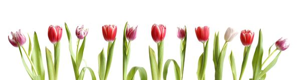 Rij van geïsoleerde bloemen Stock Foto
