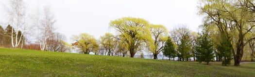 Rij van gemengde boomverscheidenheden in de vroege lente Royalty-vrije Stock Afbeeldingen