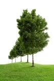Rij van groene bomen Royalty-vrije Stock Fotografie