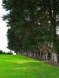 Rij van groene bomen Stock Fotografie