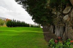Rij van groene bomen Royalty-vrije Stock Foto's