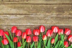 Rij van heldere rijke rode tulpenbloemen op stam Houten achtergrond met scopy tekstruimte De welkom lente en de zomer De bedelaar Stock Fotografie
