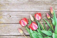 Rij van heldere rijke rode tulpenbloemen op stam Houten achtergrond met scopy tekstruimte De welkom lente en de zomer De bedelaar royalty-vrije stock foto's