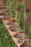 Rij van Ingemaakte Bomen Stock Foto's