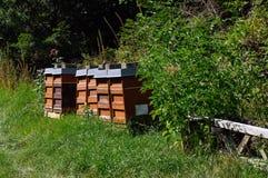 Rij van kleurrijke houten bijenkorven met bomen op de achtergrond Royalty-vrije Stock Foto