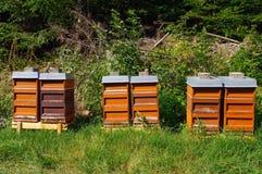 Rij van kleurrijke houten bijenkorven met bomen op de achtergrond Royalty-vrije Stock Afbeelding