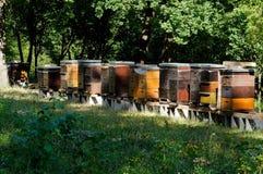 Rij van kleurrijke houten bijenkorven met bomen op de achtergrond Royalty-vrije Stock Foto's