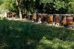 Rij van kleurrijke houten bijenkorven met bomen op de achtergrond Royalty-vrije Stock Fotografie
