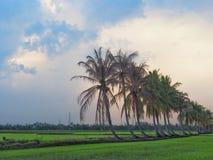 Rij van kokospalmen op de gang in het padieveld bij Thais platteland, Mooie wolken en zonneschijn met het concept landelijke Li Stock Fotografie