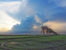 Rij van kokospalmen op de gang in het padieveld bij Thais platteland, Mooie wolken en zonneschijn met het concept landelijke Li Royalty-vrije Stock Afbeeldingen
