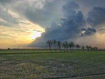 Rij van kokospalmen op de gang in het padieveld bij Thais platteland, Mooie wolken en zonneschijn met het concept landelijke Li Royalty-vrije Stock Foto's