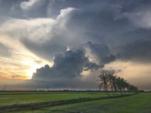 Rij van kokospalmen op de gang in het padieveld bij Thais platteland, Mooie wolken en zonneschijn met het concept landelijke Li Stock Foto's