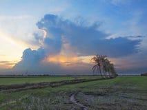 Rij van kokospalmen op de gang in het padieveld bij Thais platteland, Mooie wolken en zonneschijn met het concept landelijke Li Stock Afbeeldingen
