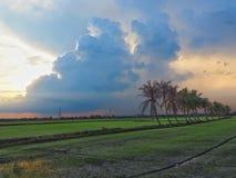 Rij van kokospalmen op de gang in het padieveld bij Thais platteland, Mooie wolken en zonneschijn met het concept landelijke Li Royalty-vrije Stock Fotografie