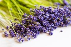 Rij van lavendelbloemen op witte achtergrond Stock Foto