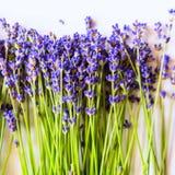 Rij van lavendelbloemen op witte achtergrond met exemplaarruimte Royalty-vrije Stock Foto's