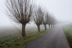 Rij van leafless wilgen naast een landweg stock afbeelding