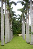 Rij van mooie palmen royalty-vrije stock afbeelding