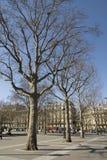 Rij van naakte bomen Stock Afbeeldingen