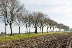 Rij van naakte bomen langs een geploegd gebied Stock Afbeeldingen