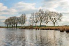 Rij van naakte bomen naast het water Stock Foto's