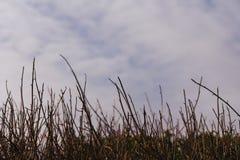 Rij van Riet en Mening van Wolken en Hemel, bij een Kustsleep in Pacifica, Californië royalty-vrije stock afbeeldingen