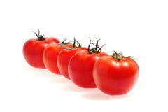 Rij van tomaten die op het wit wordt geïsoleerde Royalty-vrije Stock Afbeelding