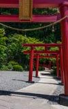 Rij van traditionele, rode Torii en ingangsweg aan het Japanse Heiligdom van Jigoku Meguri Shinto tussen een groen landschap In B stock fotografie