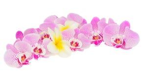 Rij van tropische bloemen Stock Foto's