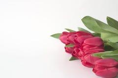 Rij van Tulpen 3 Royalty-vrije Stock Afbeeldingen