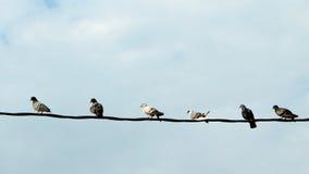 Rij van vogels Royalty-vrije Stock Foto's