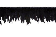Rij van zwarte decoratieve veren Royalty-vrije Stock Afbeeldingen