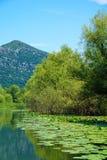 Rijeka Crnojevica, Skadar sjö royaltyfri bild
