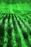 Rijen en Voren op Geploegd Gebied voor de Landbouw Landbouwprik royalty-vrije stock foto's