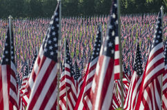 Rijen van Amerikaanse vlaggen Royalty-vrije Stock Afbeelding