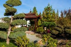 Rijen van Bansai-bomen in de verkopende installaties van een tuincentrum Zaailingen van diverse bomen in potten in een tuinwinkel stock foto's