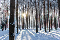 Rijen van bomen Royalty-vrije Stock Foto
