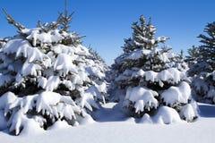Rijen van Bomen die met Sneeuw worden behandeld Stock Foto