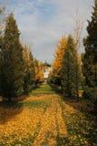 Rijen van bomen en pagode erachter Stock Fotografie