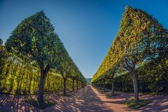 Rijen van bomen en struikenpark Perfectionismesymmetrie en meetkunde in tuin perspectief fisheye lens stock foto's