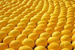 Rijen van citroenen Stock Fotografie
