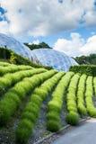 Rijen van groen gras met interactieve toerist biodomes op bac stock foto