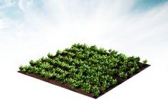 Rijen van groenten Royalty-vrije Stock Afbeelding